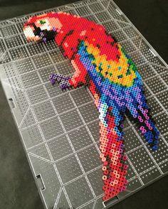 Parrot perler beads by  allthingsbelle