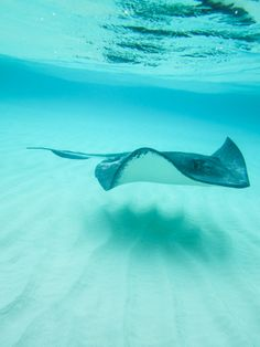 Stingrays in Grand Cayman! Been there, done that. Would definitely do it again! Beautiful experience!