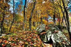 #ADK #Adirondacks - Autumn on the Rocks