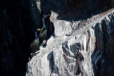 Cormorants in Kenai Fjords National Park