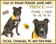 PRINCE HAS $55.00 IN PLEDGES & HES SET TO BE KILLED BY THE ORANGE COUNTY FLORIDA KILL SHELTER UNLESS YOU SAVE HIM. PLEASE HELP...