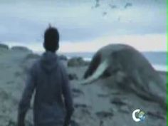 Documental De Sirenas El Descubrimiento Comercial