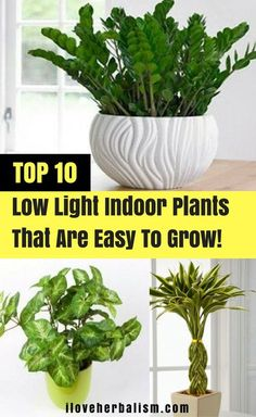 20 Low Light Indoor Plants That Are Easy To Grow Low 400 x 300