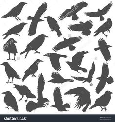Find demon wings stock images in HD and millions of other royalty-free stock photos, illustrations and vectors in the Shutterstock collection. Quoth The Raven, Raven Bird, Tattoo Vieja Escuela, Crows Drawing, Rabe Tattoo, Demon Wings, Raven Logo, Dark Wings, Crows Ravens