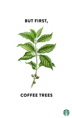 The Starbucks One Tree For Every Bag Commitment—for every bag of coffee you buy, we'll donate a rust-resistant coffee tree to a farm. Together, we can give farmers a brighter, more promising future—and ensure a strong coffee industry for decades to come.