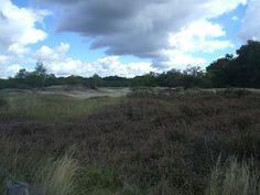 Birken, Heide und Dünen. Das sind die Boberger Dünen