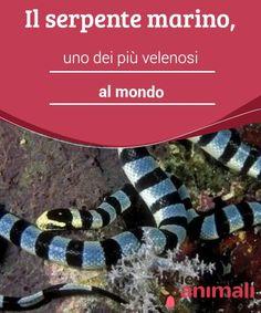 nipponico serpente sesso