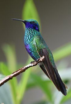 Hummingbirds are small, colorful birds with iridescent feathers. There are many types or species of hummingbirds in the world.