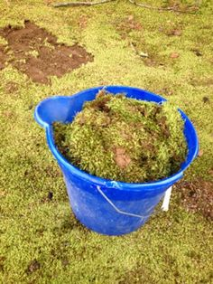 Charlotte's Empire : How to grow moss Diy Garden Bed, Garden Art, Garden Plants, Gardening For Beginners, Gardening Tips, Growing Moss, Moss Plant, Outside Plants, Moss Garden