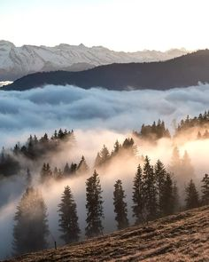 Mountain mist and light ...