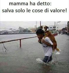 ..e questo è di un valore inestimabile! Dog Lovers, Animal Testing, Animal Rescue, Animals For Kids, Cute Animals, Animal Cruelty, Dogs And Puppies, Doggies, Four Legged