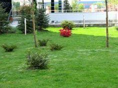 Sisteme de irigatii, eco-horticultura servicii e-g.ro Plants, Horticulture, Plant, Planets