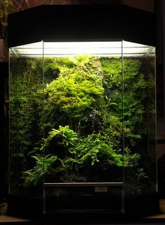 Moss and Carnivourous Plant Vivarium - I love the nice centered layout to match with the angled front. The additional layers near the bottom help add dimension. Not too shabby! Frog Terrarium, Aquarium Terrarium, Reptile Terrarium, Vivarium, Planted Aquarium, Aquarium Fish, Aquascaping, Garden Plants, Indoor Plants