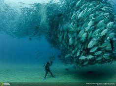 Fondo marino