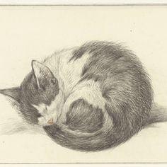 Opgerold liggende, slapende kat, Jean Bernard, 1825 - Rijksmuseum