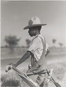 Resting the mules which get too hot when the cotton is high in mid-summer cultivation; King and Anderson Plantation, near Clarksdale, Mississippi Delta, Mississippi, August 1940. Schomburg Center for Research in Black Culture / Photographs and Prints Division.