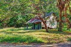 Un fantasma en  el  bosque---Parque Nacional Palo Verde (sector  Catalina), Guanacaste, Costa Rica