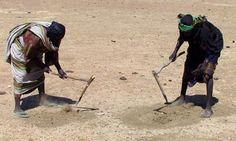 MDG : Sahel Food crisis