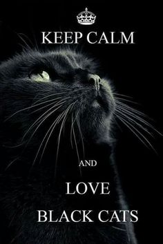 All cats are special, and that includes black cats. Some people don't thiink so though, but black cats are just as loving as other cats. A friend of mine had a beautiful black cat named Magic and he was a gentle lovely cat. Cool Cats, I Love Cats, Cute Cats And Kittens, Beautiful Cats, Animals Beautiful, Cute Animals, Beautiful Pictures, Crazy Cat Lady, Crazy Cats