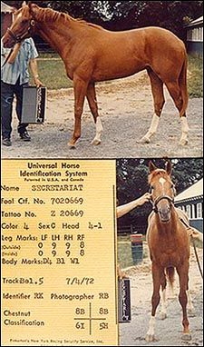 Secretariat as a 2 year old, 1972  The perfect racehorse.