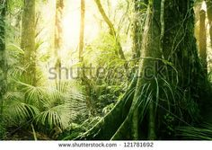 Morning sunlight in tropical jungle - stock photo
