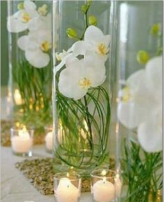 Orchid Decoration Ideas
