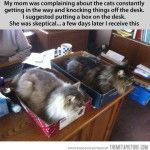 Cats + Boxes= Extreme Happiness