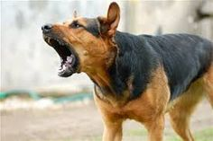 How Dangerous Is the Item My Dog Swallowed?