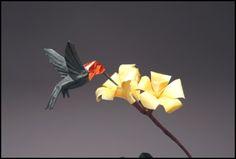 Anna's Hummingbird: Robert J Lang