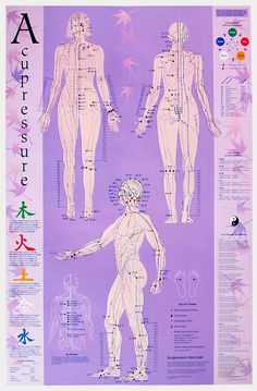 This is a large acupressure chart showing all the Acupressure points, very nice looking and practical. Illustrates all 12 meridians, source points, al Acupressure Chart, Acupuncture Points Chart, Acupressure Therapy, Acupressure Treatment, Acupuncture Benefits, Acupuncture For Weight Loss, Reflexology Massage, Massage Therapy, Ayurveda