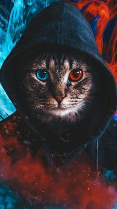 Hoodie Cat iPhone Wallpaper - iPhone Wallpapers