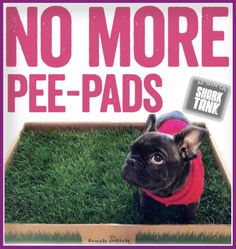 Most recent Pictures Fresh PatchNo More Pee Pads Suggestions How Are Dogs Provided Simple Obedience Training ? It includes the absolute most fundamental orders Chihuahua Terrier Mix, Chihuahua Puppies For Sale, Cute Puppies, Dogs And Puppies, Doggies, Service Dog Training, Dog Training Books, Training Your Dog, Training Tips