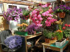 Moje kwiatowe królestwo | Babcia radzi, coś tam  Ogólny plan mego zakątka kwiatowego. Tu prześcigają się kwiaty między sobą swoimi kolorami i zapachami. I naprawdę nie wiem, które są bardziej uwodzicielskie.