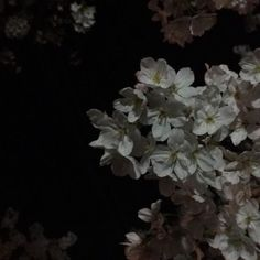 Find images and videos about black, aesthetic and flowers on We Heart It - the app to get lost in what you love. Aesthetic Images, Aesthetic Backgrounds, Aesthetic Wallpapers, Night Aesthetic, Aesthetic Grunge, Aesthetic Dark, Japanese Aesthetic, Dark Feeds, Looks Dark