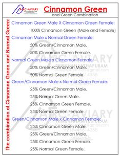 Examples of Pairing with the Cinnamon Green and Normal Green Cockatiel, Budgies, Love Birds Pet, African Lovebirds, Conure, Parakeet, Bird Feathers, Fisher, Cinnamon