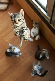 This cat is jumping really high to prove to the other floor-ridden cats how much he doesn't suck.