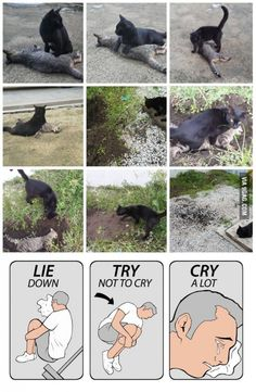 Cat died near my area today.