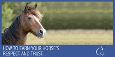 how to earn your horses respect and trust