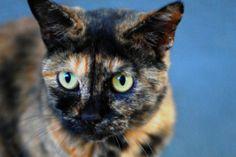 猫の種類 サビ猫