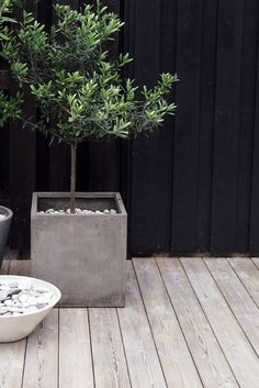 Combination of natural bleached timber, concrete & black with green foliage..nice* Tuin Styling