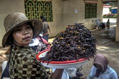 Fried Spiders . Phnom Penh Cambodia - thanks for sending this, mom. I'll make sure to call you every time I have nightmares.