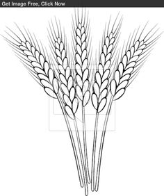 Wheat Stalk Clip Art Black and White Embroidery Stitches, Embroidery Patterns, Hand Embroidery, Outline Drawings, Easy Drawings, Wheat Drawing, Wheat Tattoo, Pyrography Patterns, Black And White Sketches