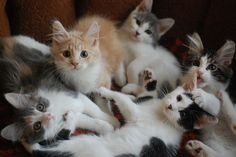 kittens - I want the ginger one!