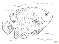Tropical Flame Angelfish Coloring Page/Line Art Drawing/B&W Image
