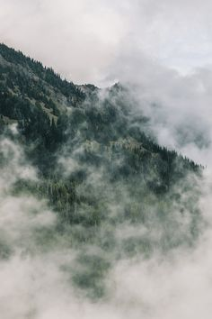 Mountain. Forest. Fog.