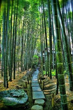 """Bamboo Temple"", Hokoku-ji, Kamakura, Kanagawa, Japan~I remember this place. Oh I miss Japan~ Beautiful World, Beautiful Places, Bamboo Garden, Japan Travel, Pathways, Wonders Of The World, Places To See, Scenery, Around The Worlds"