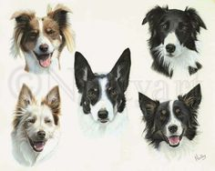Pastel montage of five Border Collies