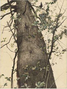 "Andrew Wyeth ~ ""The Oak"", 1944"