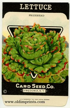 1000 Images About Old Card Seed Co Packet Designs On Pinterest Seeds Lettuce Seeds And