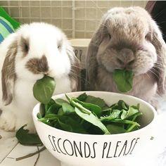 "2,827 Likes, 68 Comments - Rae Dunn (@raedunn) on Instagram: "". . . rabbit. rabbit.  hellO OctOber !  (via @rowdyrabbit_)"""
